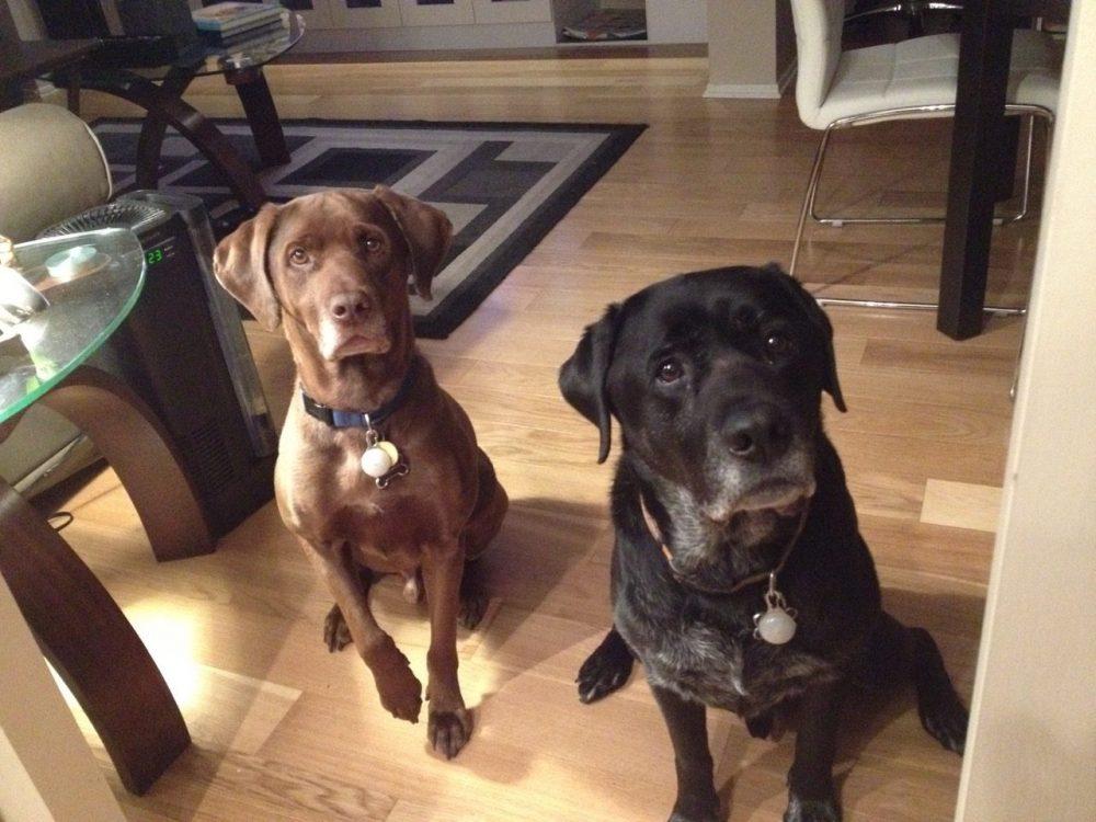 Pet friendly condominiums in Ottawa